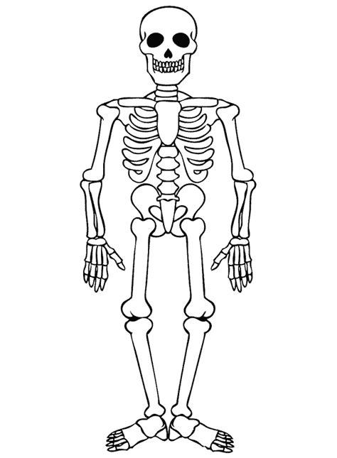 Kleurplaat Skelet Mens lichaam kleurplaten skelet