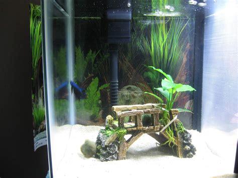 petsmart fish aquarium decorations aquarium design ideas