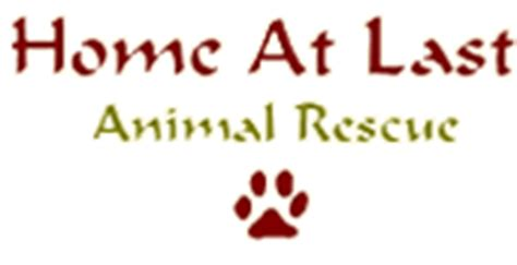 Home At Last Rescue by Adopt A Or Cat From Home At Last Animal Rescue