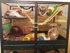 17 Best images about Pet cage setups! on Pinterest | Sugar ...