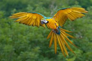 Beautifull Birds Wallpapers | DaerTube