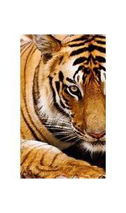 Experience A Tiger Safari in India - Jetsetta
