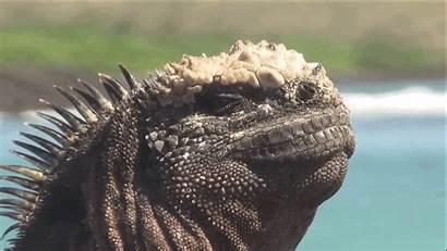 Lizard Marine Reptiles Iguana Monster Godzilla Giant