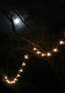 Dragonfly Patio Lights String Moonlight And A String Of Lights The Firefly Forest