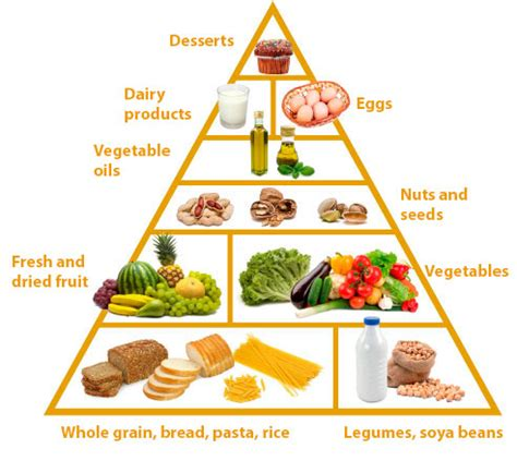 what is ovo vegetarian the ovo lacto vegetarian diet pipo programme