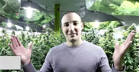 chambre de culture complete cannabis chambre culture cannabis complete top cannabis culture