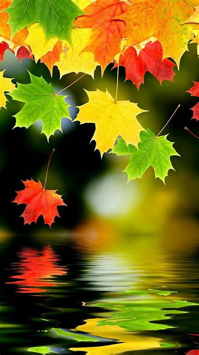 Autumn Wallpapers Leaves Fall Nature Water Leaf