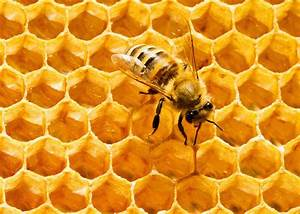 Hexagons are the most scientifically efficient packing ...  Honeycomb