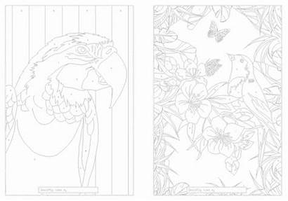 Exotic Birds Colouring Coloring Numbers Flame Tree