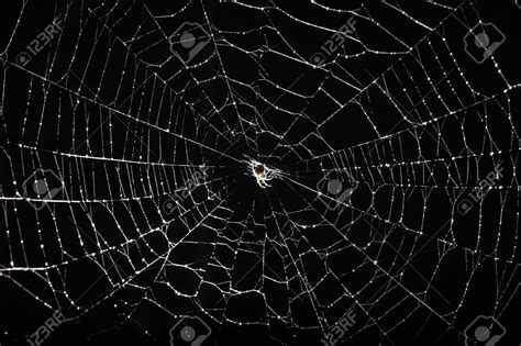 Background Spider Web by 67 Spider Web Backgrounds On Wallpapersafari