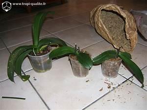 Comment Soigner Une Orchidée : comment s occuper d un orchid e l 39 atelier des fleurs ~ Farleysfitness.com Idées de Décoration