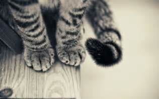 cats paws cat s paws and wallpaper 17078