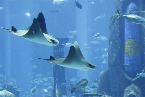 i like 2 travel 9 of the best aquariums around the world