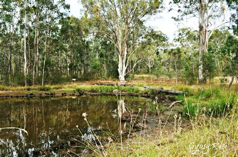 top nature attractions  campbelltown surrounds sydney