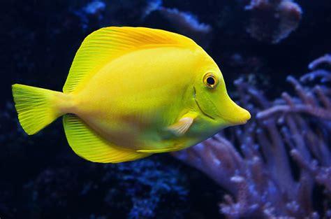 fish   sea  yellow
