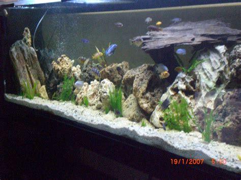 installation d 233 cor aquarium cichlid 233 s africain