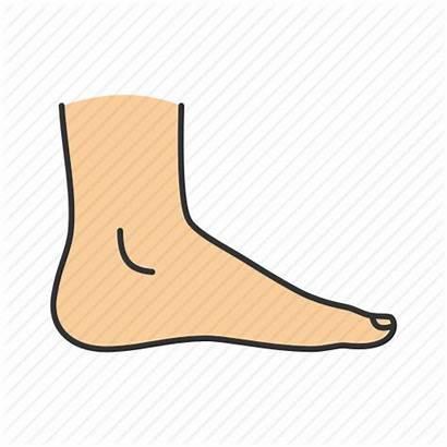Clipart Foot Parts Transparent Webstockreview Filled