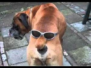 Really Funny Dogs - the Coolest Dog Photos Ever - YouTube