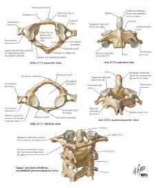 Cervical Vertebrae C1 and C2