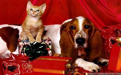 Christmas Dog Wallpapers Kitten Animals Crazy Kitty