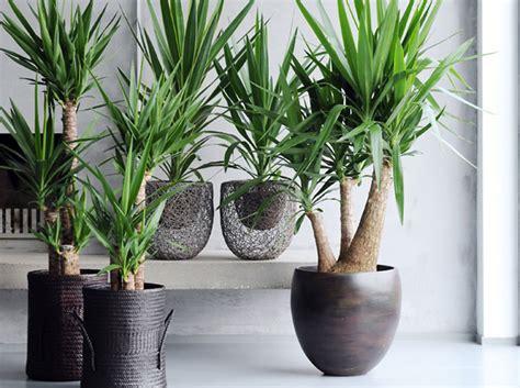 pour mon bureau des plantes pour le bureau