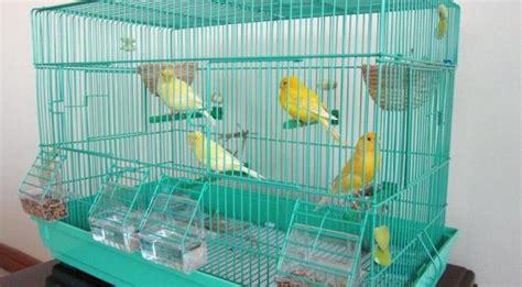 Gabbie Usate Per Canarini - gabbia per canarini il contenuto di canarini in casa