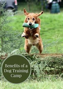 benefits of a dog training camp With dog training camp