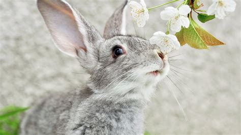 cute rabbits hd wallpaper background image