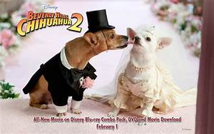 Beverly Hills Chihuahua 2 Wallpapers
