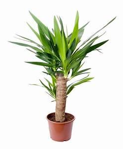 Plante Detoxifiante : plante d appartement exotique l 39 atelier des fleurs ~ Melissatoandfro.com Idées de Décoration