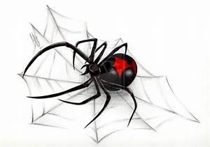 Realistic Black Widow Drawing | www.imgkid.com - The Image ...
