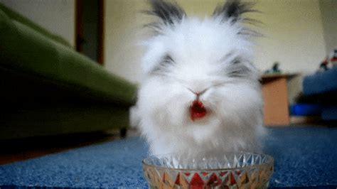 hilarious animals eating strawberries barnorama