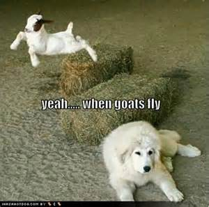 Funny Animals with Captions Goats