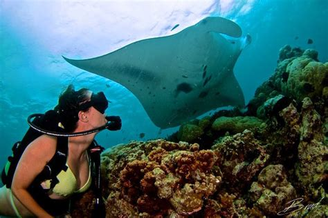 scuba diving  girls guide   underwater world