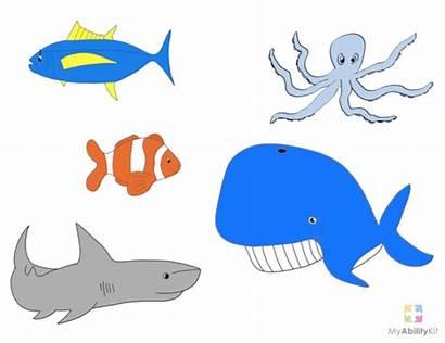 Fish Slippery Preschool Activities Song Songs Visual