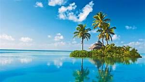 Hanfpalme Braune Blätter : palmen bilder palmen palmen pictures to pin on pinterest ~ Lizthompson.info Haus und Dekorationen