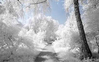 Wallpapers Background Desktop Winter Landscape Unique Nature