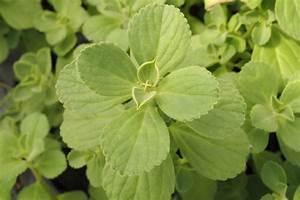 Verpiss Dich Pflanze : verpiss dich pflanze wirksam gegen hund katze plantura ~ Orissabook.com Haus und Dekorationen