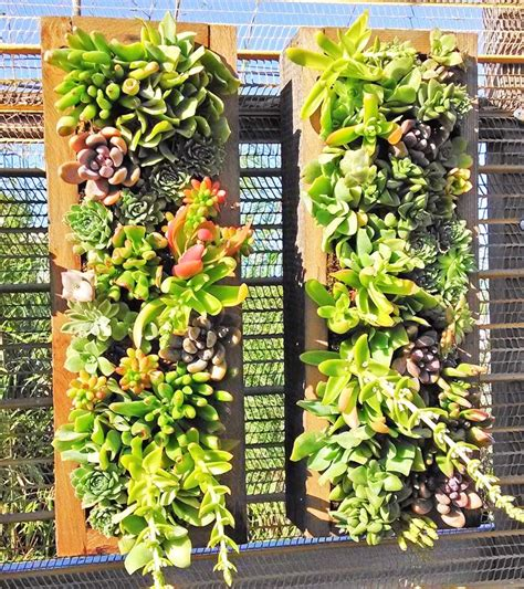 Vertical Garden Succulent Wall Panels by Succulent Wall Panels Cactus Jungle