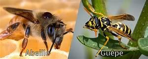Difference Entre Catalyse Et Pyrolyse : diff rence entre abeille et gu pe ~ Premium-room.com Idées de Décoration