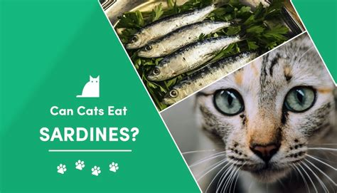 can cats eat sardines in brine