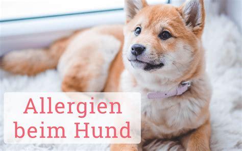 themenspecial allergien beim hund fellomed