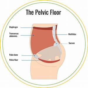 4 Week Postpartum Pelvic Floor Therapy  U2013 Kristen Johnson