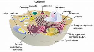 Cell Structures  U2039 Opencurriculum