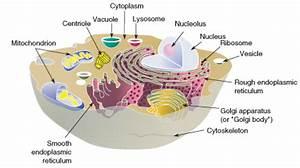 Do Plant Cells Have Flagella