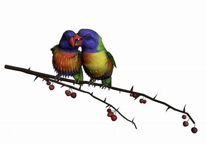 Bird Clipart Birds Deviantart Photoshop Transparent Library