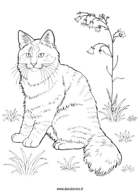 disegni da colorare 44 gatti polpetta disegni da colorare di 44 gatti