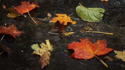 Autumn Evening Rainy Cinemagraph Gifs Another Cinemagraphs