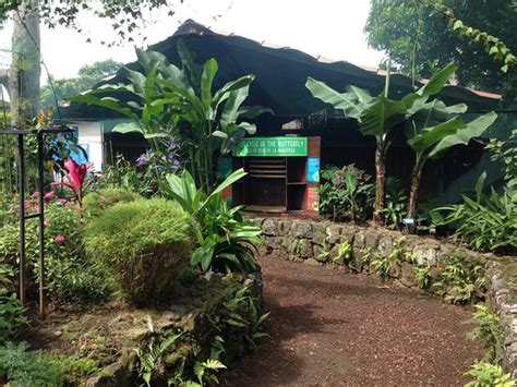 Café britt is a costa rican company that produces and markets gourmet coffee, chocolate and other products. Britt Coffee Tour (Heredia, Costa Rica): Top Tips Before You Go (with Photos) - TripAdvisor