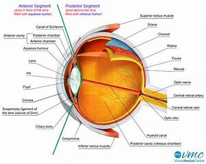 Human Eye Anatomy And How Vision Works Information